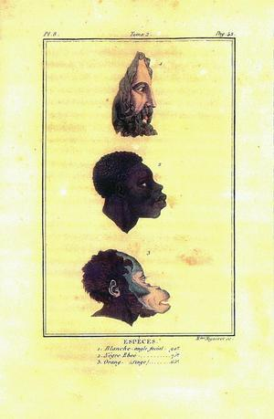 Julien-Joseph Virey, Columnar Rise of Heads in Profile with Head of White Man, A Negro and an Orangutan, 1824